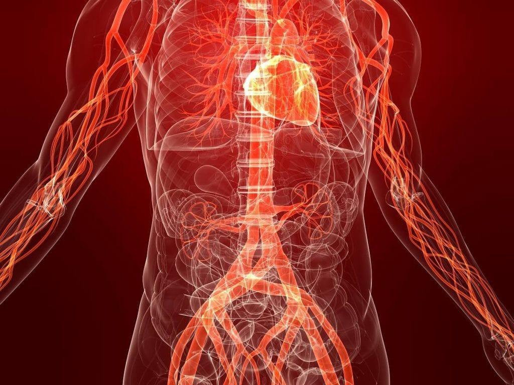Нормальное кровообращение у человека