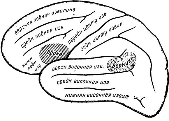 речевые зоны мозга