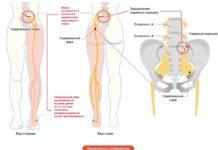 Размещение седалищного нерва в организме