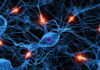 Периферическая невропатия - симптомы и проявления
