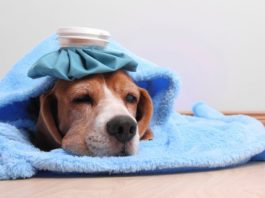 Больная собака - что делать